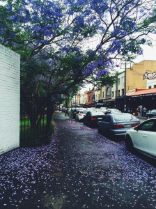I have an obsession with purple and flowers. It's everywhere at the moment brightening up the streets. This was in Newtown.